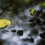 Bild 3 - Dubbelxpo i Rya skog