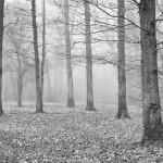 När dimman lättar