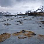 9. Gult gräs på Lamholmens strand