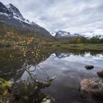 Björk mot Skarfjellet