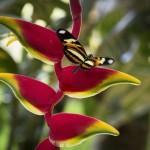 Fjäril på lika vacker blomma