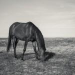 Ensamma hästen