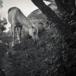 Mias betande häst © Mia Lindbäck