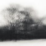 Rörelse i Rya skog