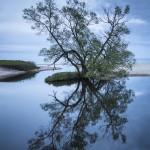 Trädet på Haväng