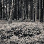 Regnblöt skogspromenad