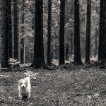 Flinga på skogspromenad