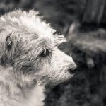 Porträtt av hund