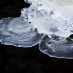 Svävande svampar