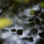 Bild 2 - Spegelingsfokus i Rya skog