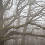 Ekar i dimma