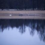 Kvällning i vattenbrynet