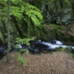 Ravin i Axeltorps skogar