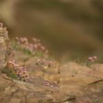 Ännu blommar Triften