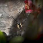 Udda - Insekt