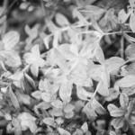 Hönsbärsröra