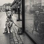Frusen hund